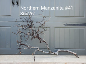 Northern Manzanita Wood #41
