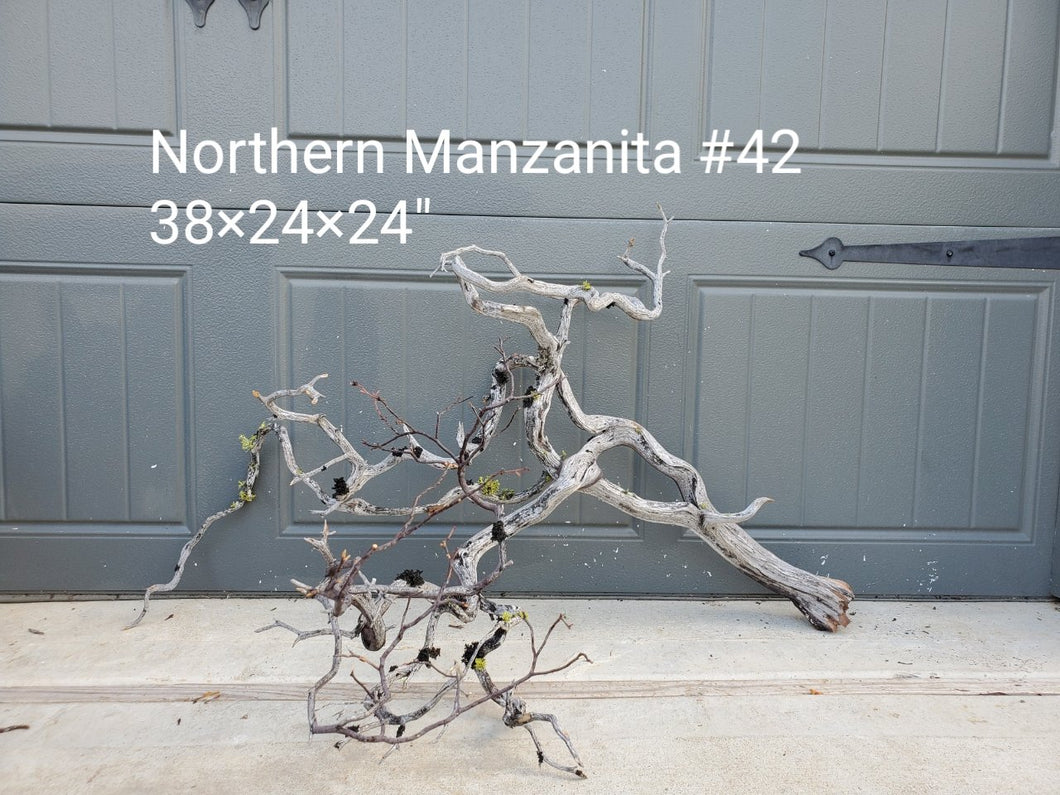 Northern Manzanita Wood #42