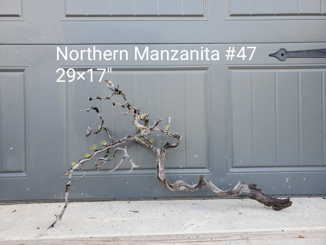 Northern Manzanita Wood #47
