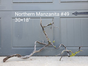 Northern Manzanita Wood #49