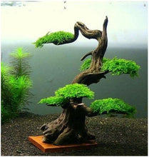 Load image into Gallery viewer, Planter Wood #02