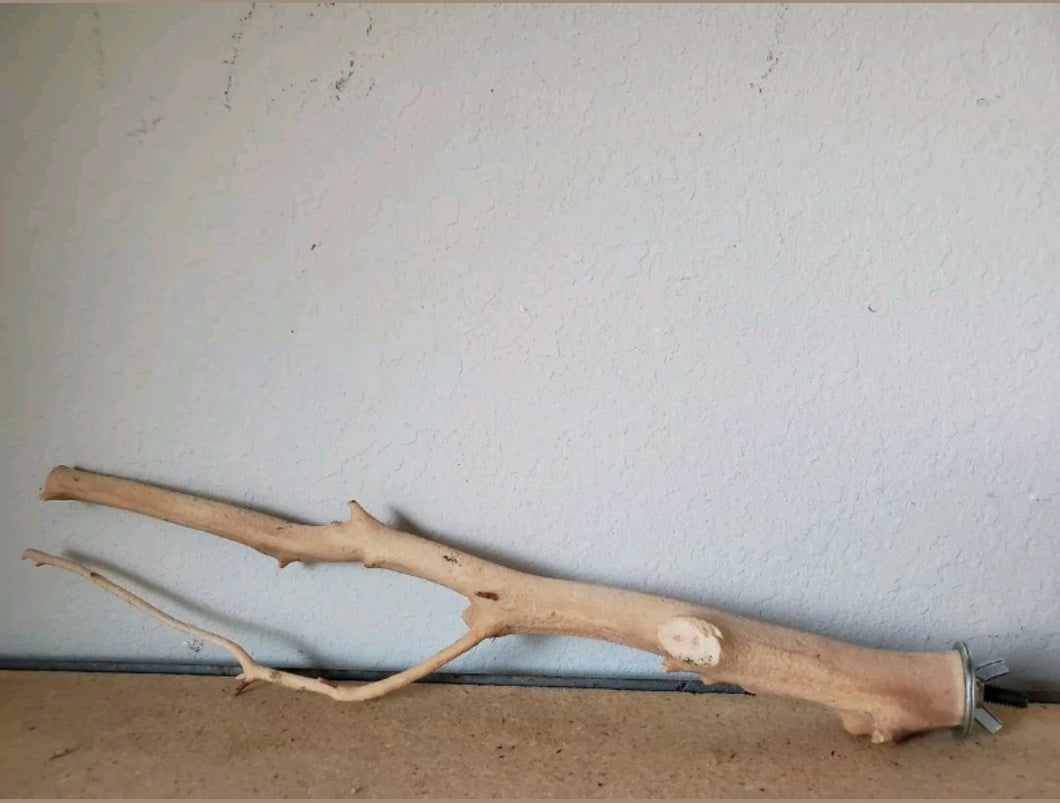 Manzanita Wood Sandblasted Single Birch Perch #03
