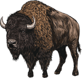 Image of Bison