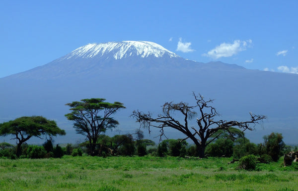 Mount Kilimanjaro in the distance