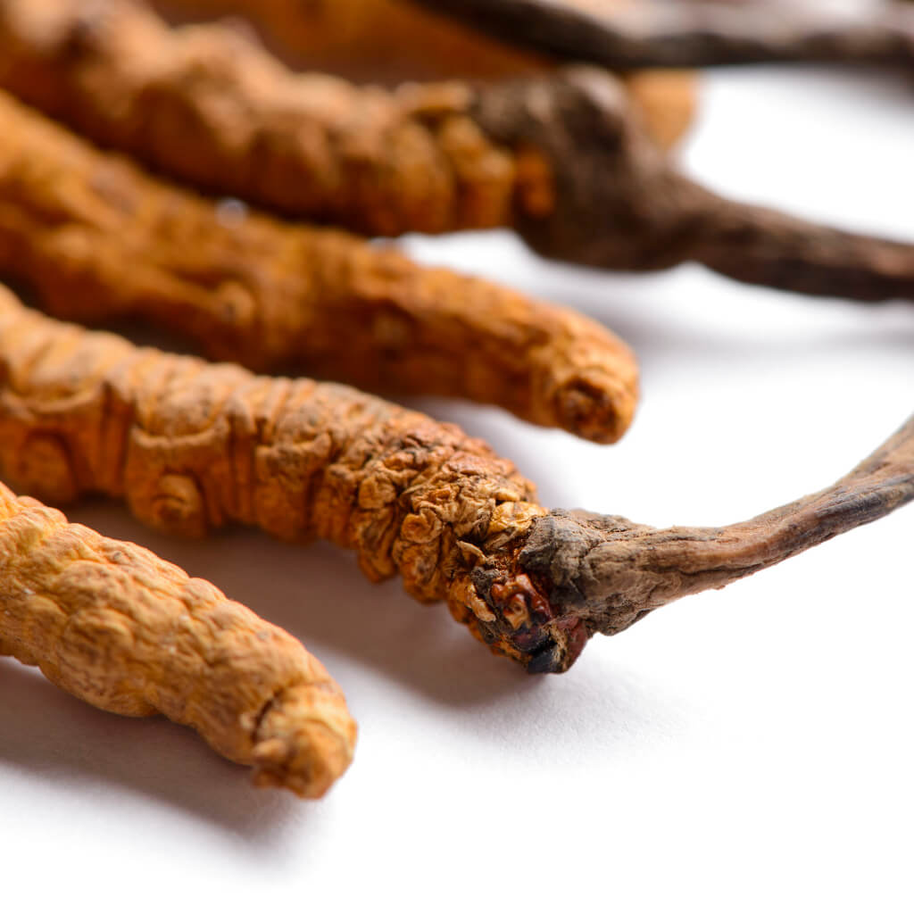 Cordyceps Sinensis - Medicinal Herbal Mushroom for metabolic performance