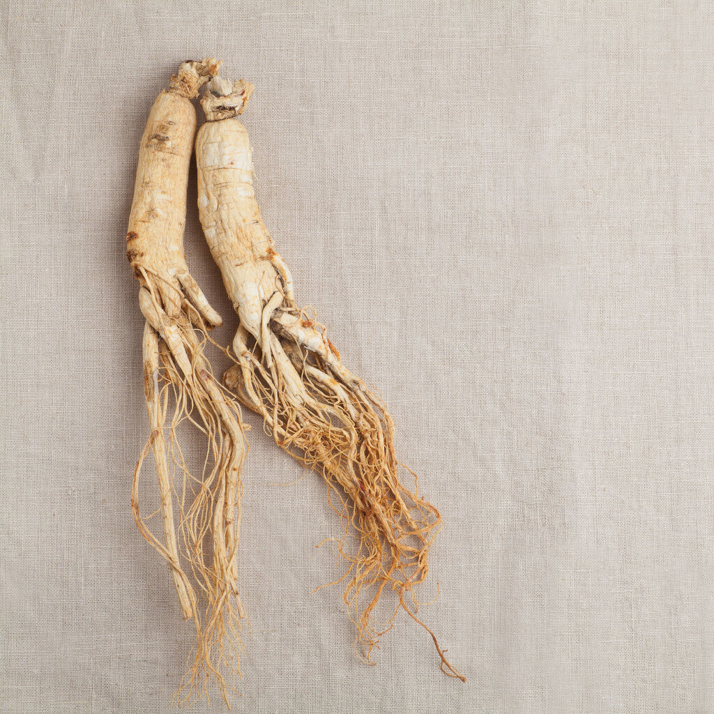 Ginseng image ingredient for Fierce Qi caffeine free herbal energy tincture