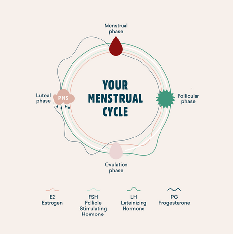 yoppie-the-menstrual-cycle