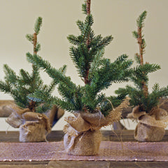 Faux Christmas Trees For Tables with Hessian Base