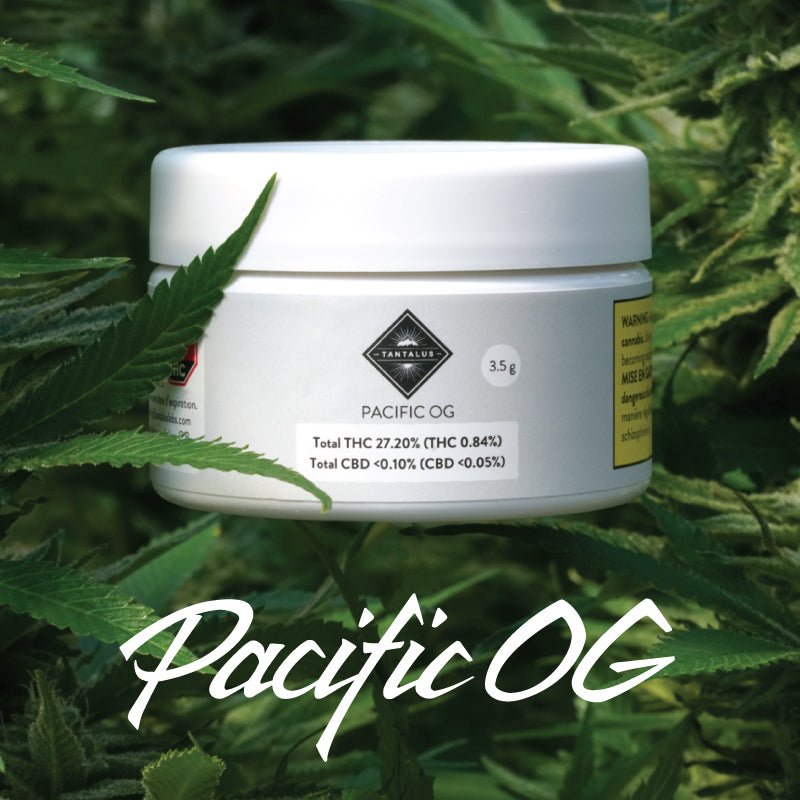 Pacific OG By Tantalus Labs