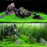 Easy Growing Water Plant Grass Fish Tank Landscape Ornament Decor