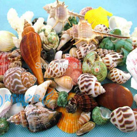50pcs  Mixed Different Conch Natural Seashell