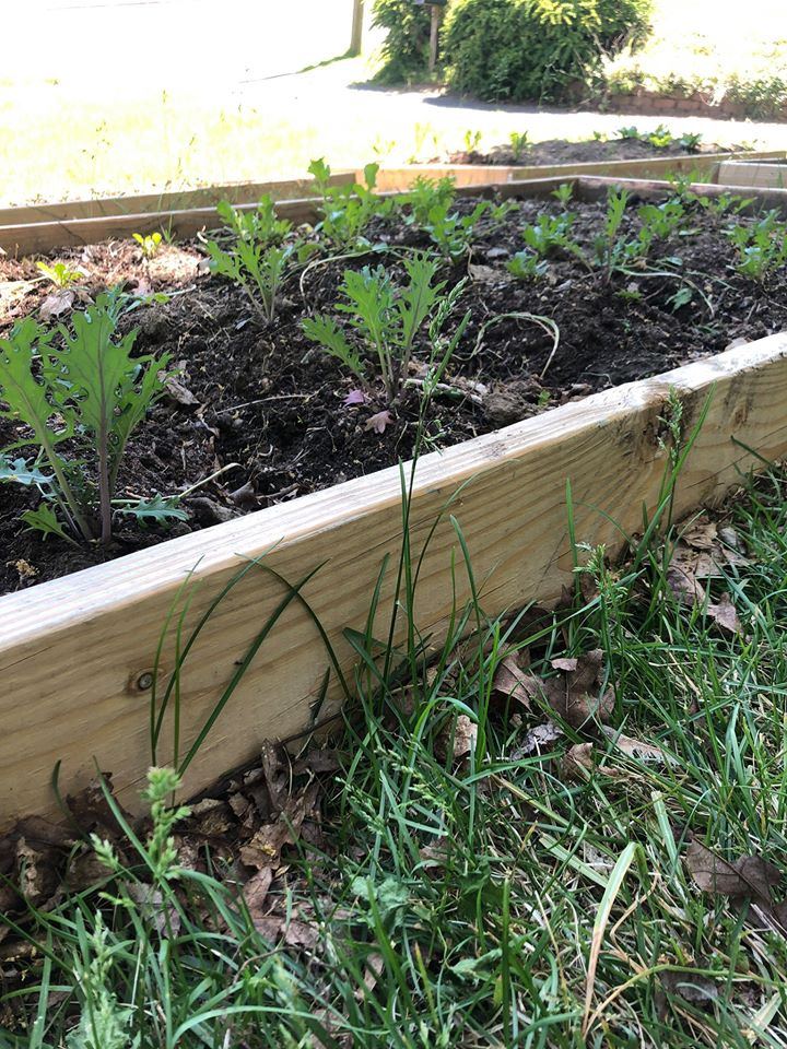 Sponsor a Raised Bed at our Sterling Street Garden and Gathering Place!