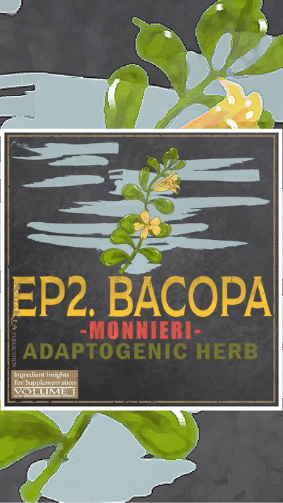 Bacopa Monnieri:  About the OG of Nootropic Herbs