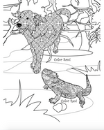 Pets in the Spring: Adult's Coloring Book