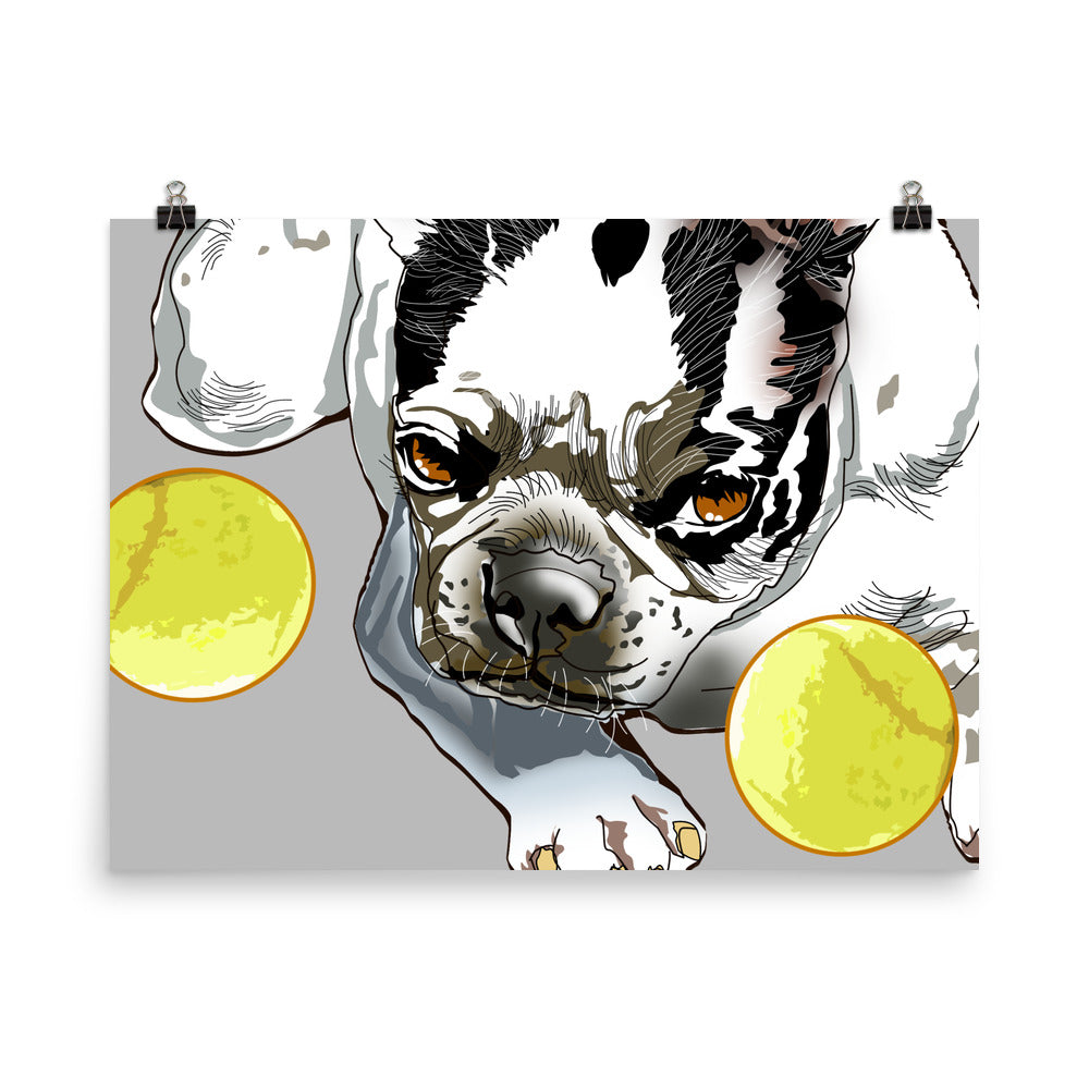 Enhanced Matte Paper Poster (in): Boston Terrier