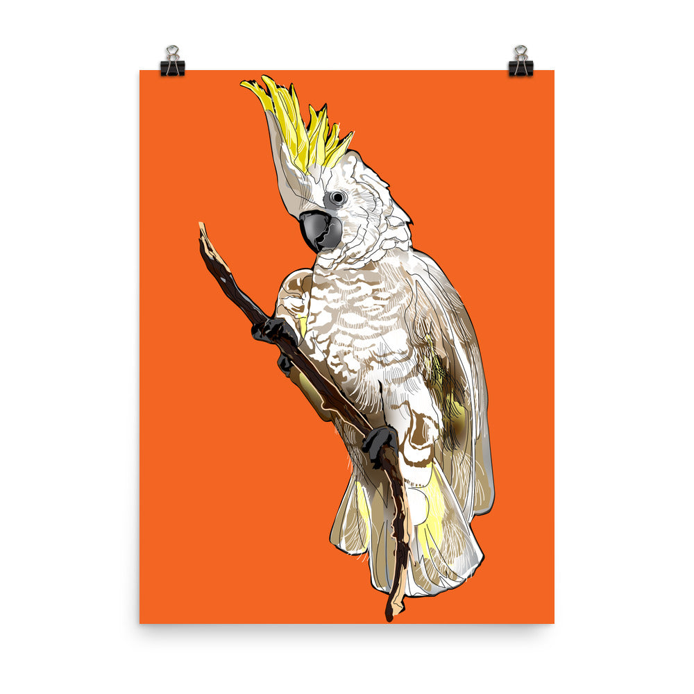 Enhanced Matte Paper Poster (in): Cockatoo