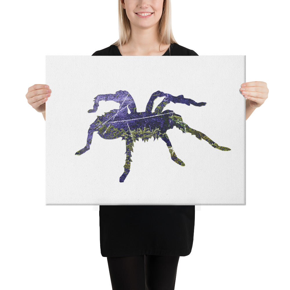 Canvas (in): Tarantula Silhouette
