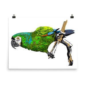 Enhanced Matte Paper Poster (in): Parrot