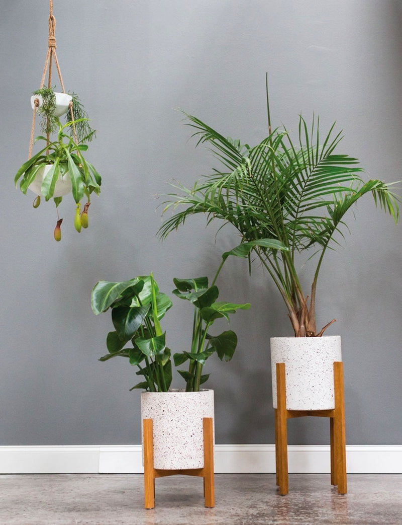 Dale Plant Stand