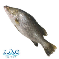 Australian Barramundi (Whole)