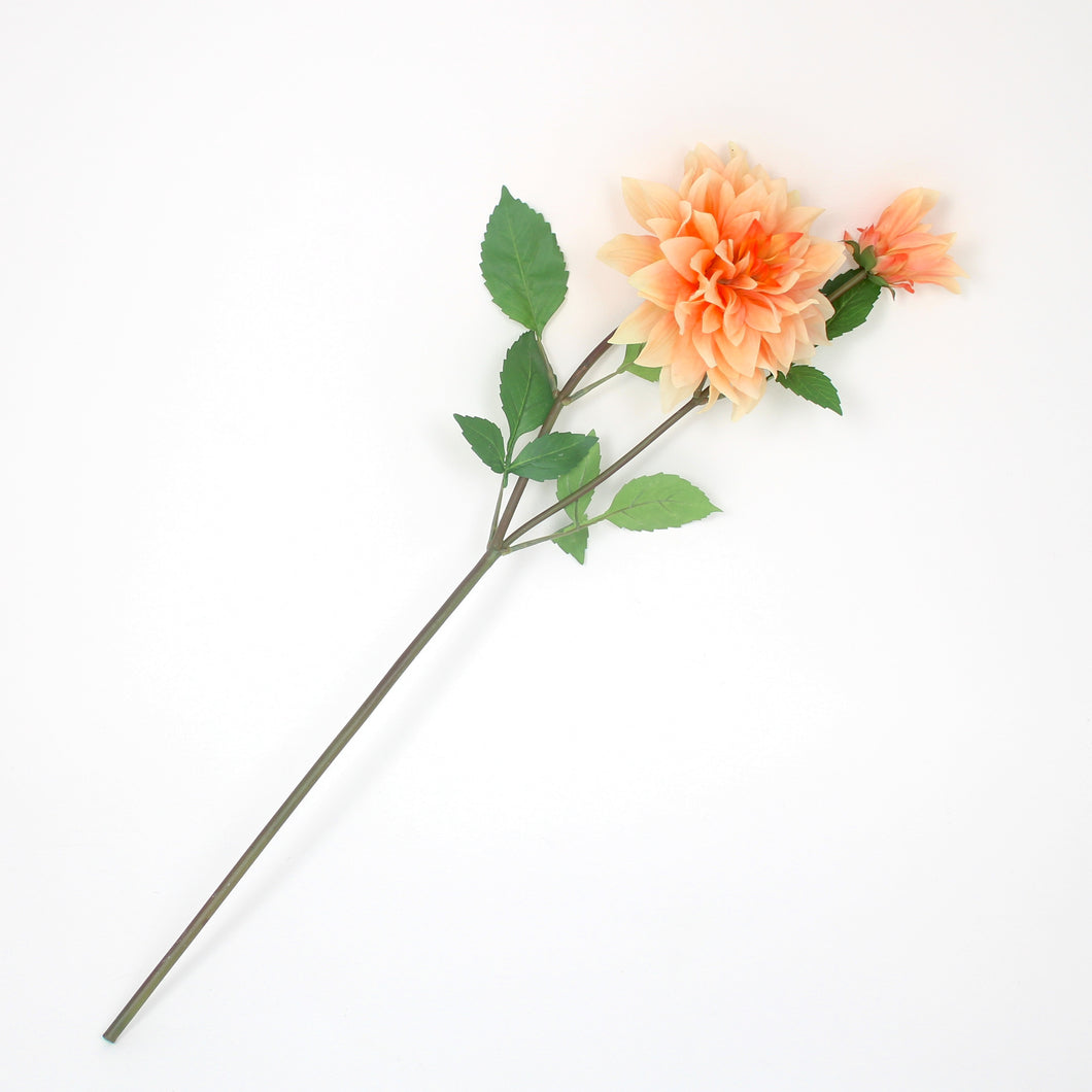 long stemmed peach dahlia