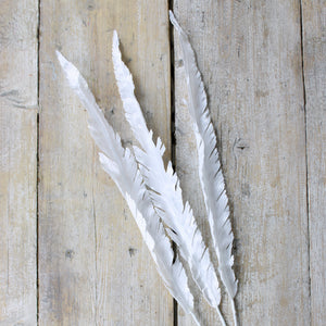 white festive feathers
