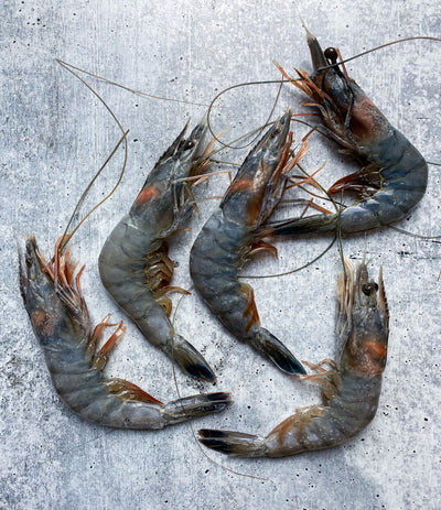 Best Blue Crystal Prawns - 1kg box photos by Regalis Foods - item 1