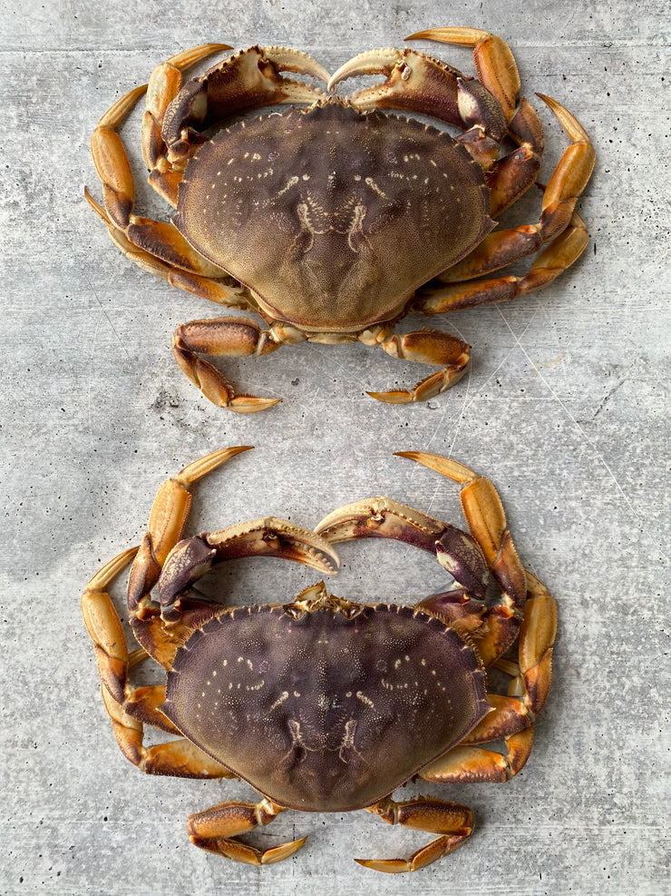 Best Live California Dungeness Crab, 1.5-2.5 lb. avg. photos by Regalis Foods - item 2