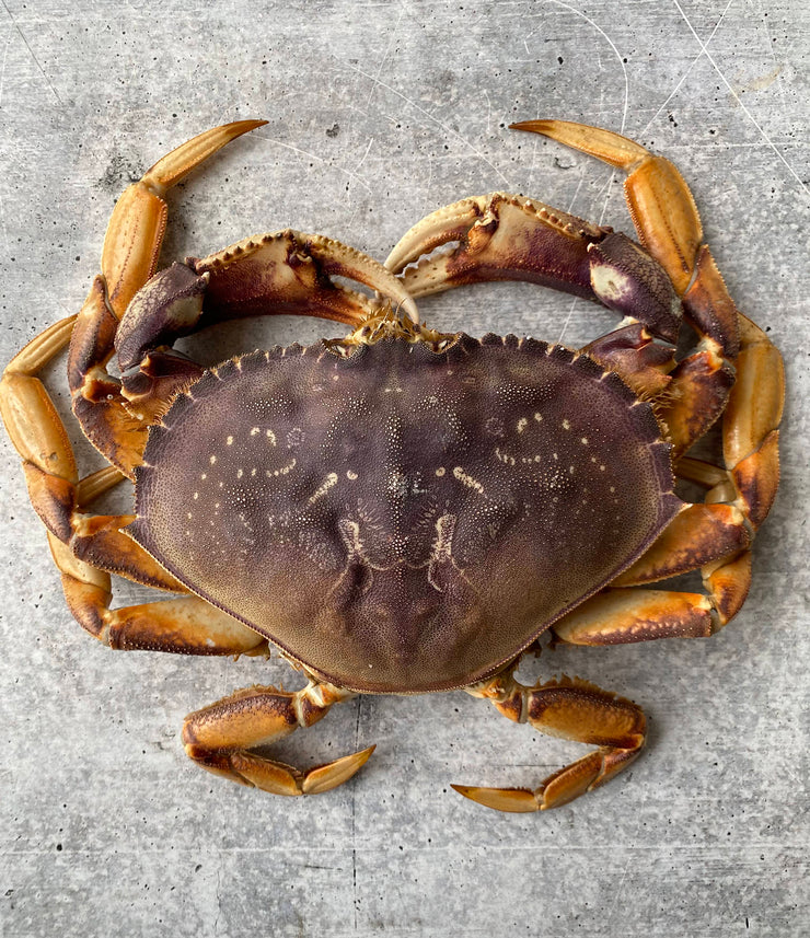 Best Live California Dungeness Crab, 1.5-2.5 lb. avg. photos by Regalis Foods - item 1