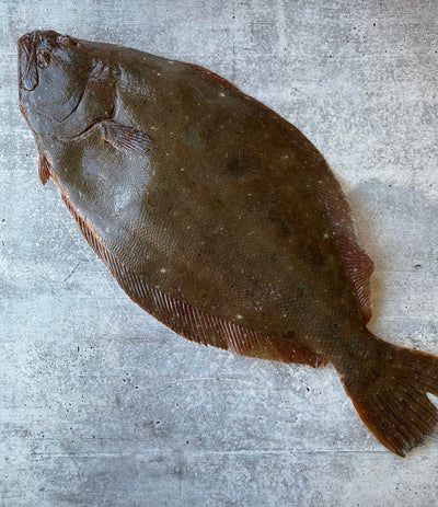 Best Large Long Island Winter Fluke photos by Regalis Foods - item 1