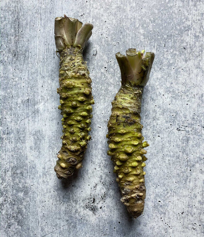 Best Fresh Wasabi Rhizome, Mazuma Variety photos by Regalis Foods - item 1