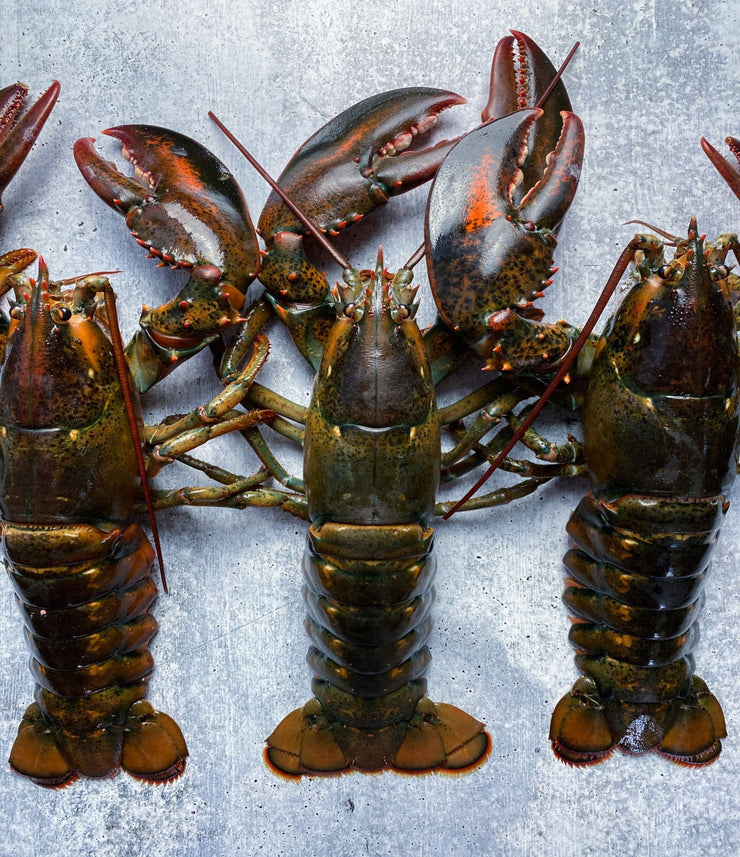 Live Hard Shell Maine Lobsters