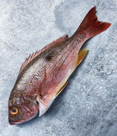 Rose Snapper (1.5 lb avg.)
