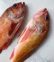 Vermillion California Rockfish