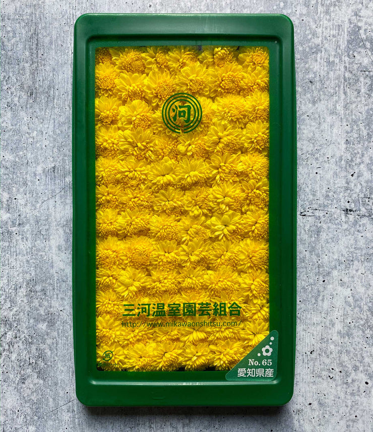 Fresh Chrysanthemum (Kiku) Flower, 25gr
