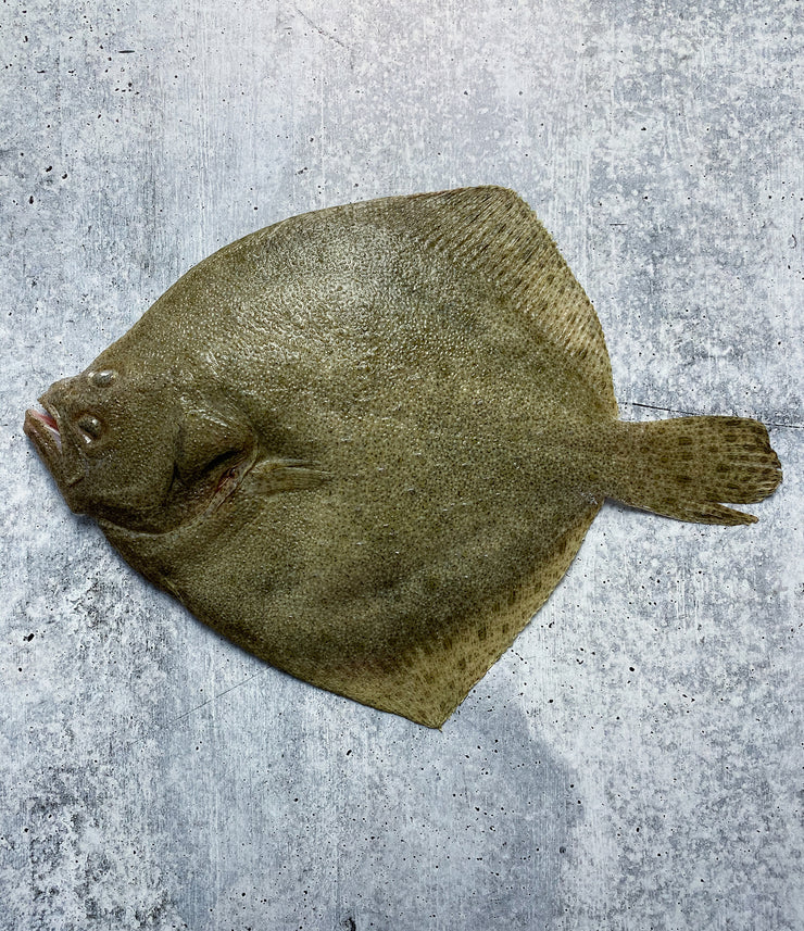 Best Spanish Turbot (Sea-Farmed) photos by Regalis Foods - item 1