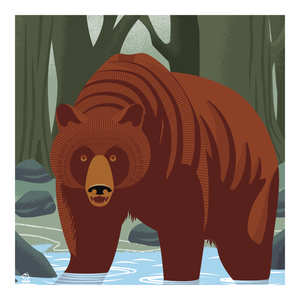 Griz Grizzly Bear in River 10x10 Giclee Print