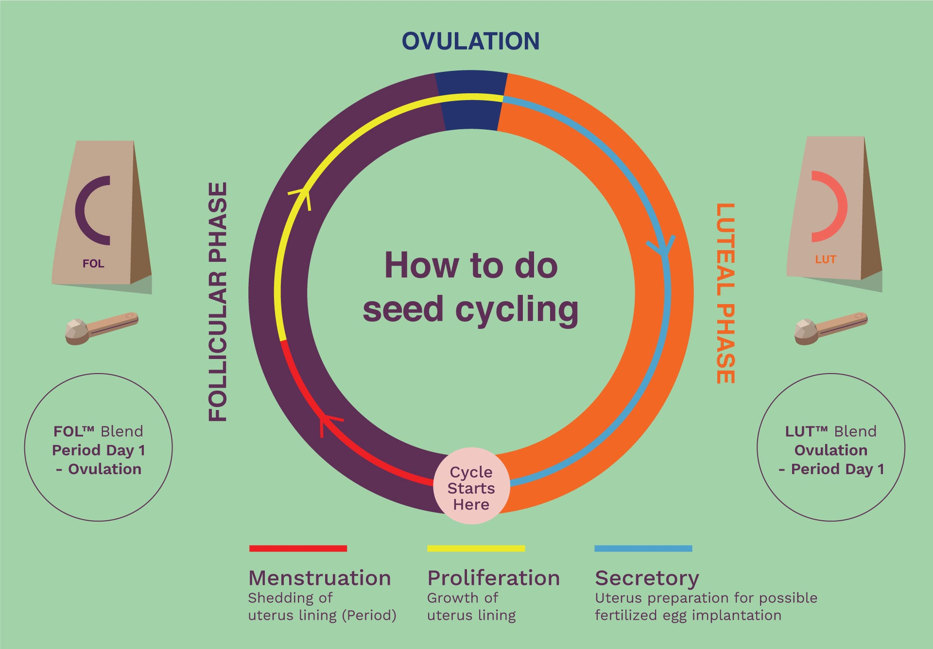 seed-cycle-blend-how-to-do-seed-cycling