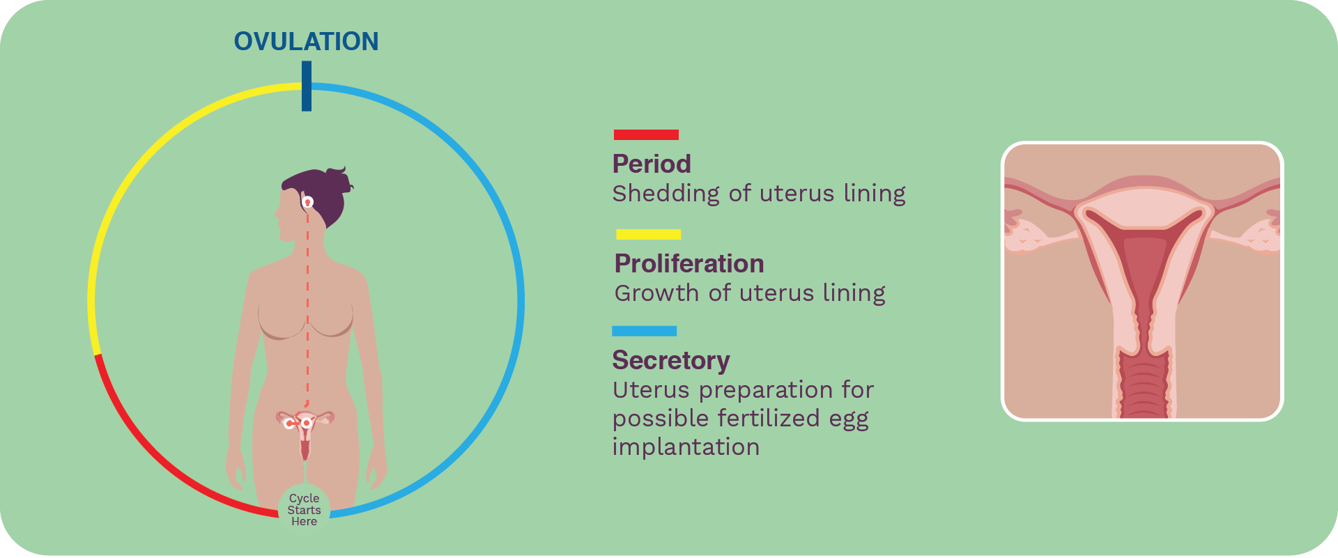 seed-cycle-blend-ready-to-use-seed-cycling-uterine-cycle