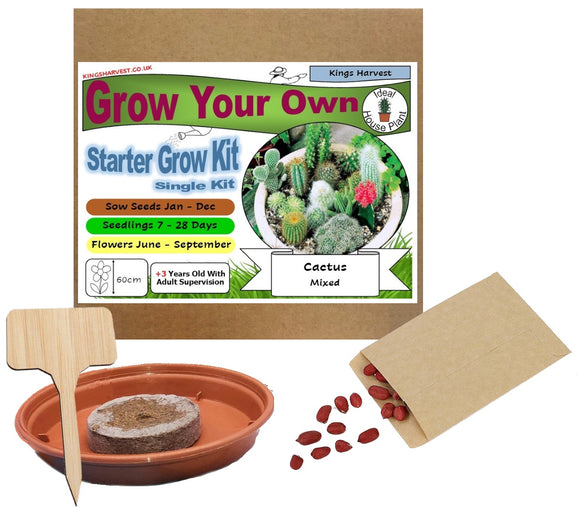 Grow Your Own Cactus Kit - Single Kit