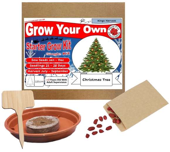 Grow Your Own Christmas Tree Kit - Single Kit