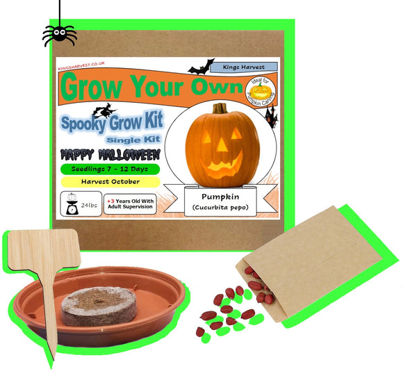 Grow Your Own Halloween Special Pumpkin Kit - Single Kit