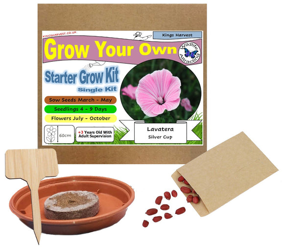 Grow Your Own Lavatera Silver Cup Flower Kit - Single Kit