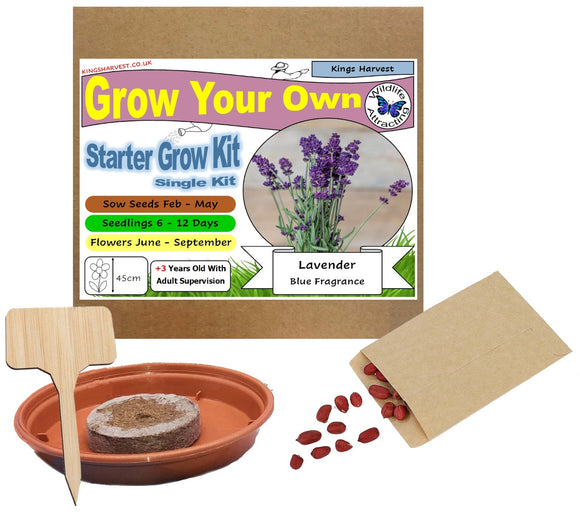 Grow Your Own Lavender Kit - Single Kit