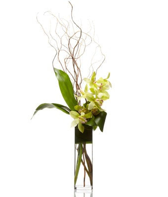 Simple Cymbidium - H.Bloom