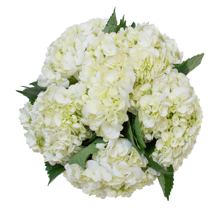 A Premium White Hydrangea Bouquet - H.Bloom
