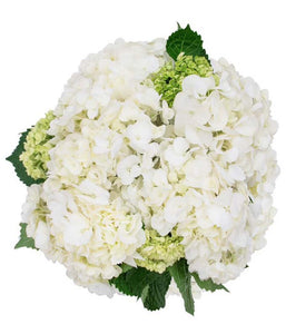 White and Mini Green Hydrangea Bouquet - H.Bloom