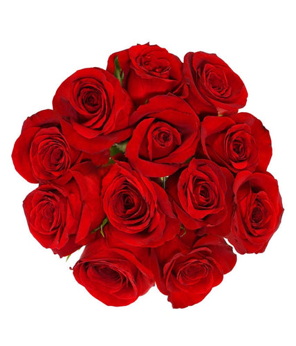 12 premium red roses in a clear wrap.