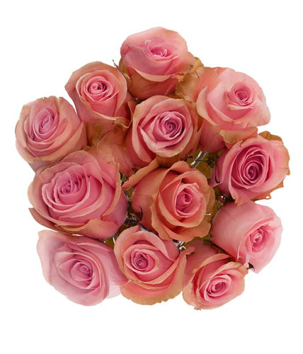 12 lovely pink roses neatly together in a clear wrap.