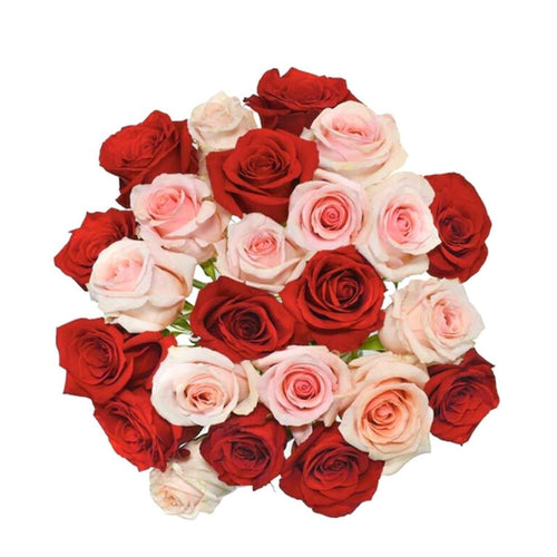 A fun mix of 12 pink and 12 red roses neatly together in a clear wrap.
